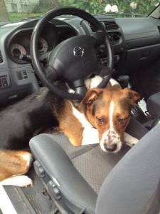 Echo, Professional Stunt Driver