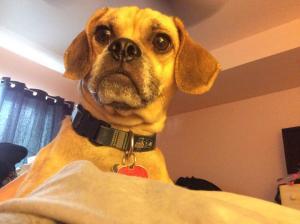 Simon, Neighborhood Canine Patrol