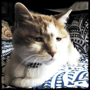 Bert, Senior Feline Citizen